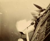 Photograph of whale pulled alongside whaling vessel