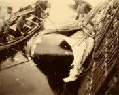 Photograph of whale and whaleboat alongside a whaling vessel