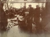 Photograph of sailors gutting salmon on deck of ship