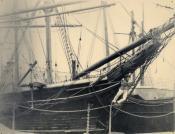 Whaler 'Active' in dock