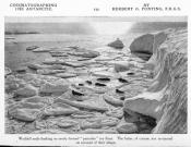 Photograph clipped from magazine: Weddell seals on pancake ice