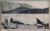 Photograph clipped from a magazine: a blue whale ready for flensing