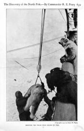 Photograph removed from a book: 'Hoisting the Polar Bear Aboard.'