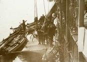 Crewmen of S.S. 'Eclipse' about to flense a black whale.