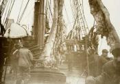 Hoisting whalebone aboard the whaling ship S.S. 'Eclipse'