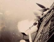 whale alongside a whaling ship