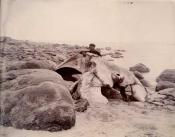Photograph of the skull of whale on beach