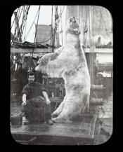 A polar bear shot by one of the crew of 'Aurora'