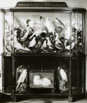 Image of a case of stuffed birds and animals from the Artic