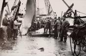 Large section of blubber being lowered onto deck of a Dundee whaling ship.
