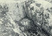 Photograph of the nest of an eider duck