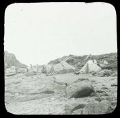 Inuit encampment with skin tents