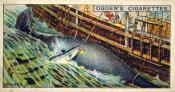 Ogdens cigarette cards, whaling series. 25 in the series. 13. Sharks round a Dead Whale