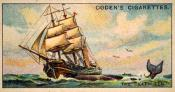 Ogdens cigarette cards, whaling series. 25 in the series. 22. The 'Kathleen'