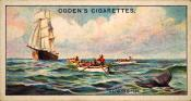 Ogdens cigarette cards, whaling series. 25 in the series. 7. Towing In