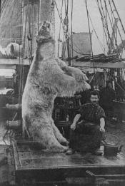 Lantern slide of a dead polar bear hanging over hatchway on a whaling ship.