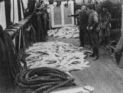Lantern slide of salmon on the deck of a whaling ship.