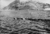 Whale turning over prior to diving
