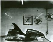 Cut up Fish (Muldoon), Fish Shop, Clerk Street, Edinburgh
